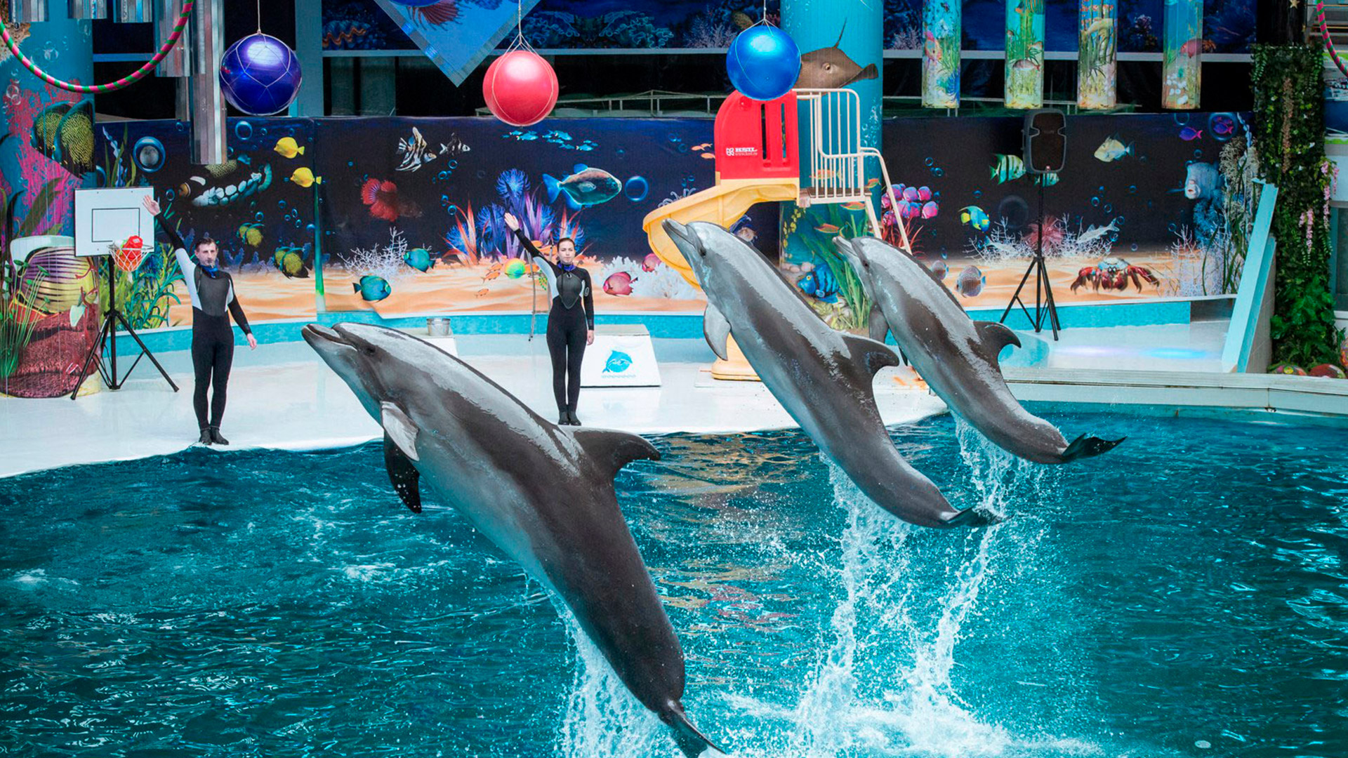 сделана евпатория дельфинарий фото скульптура выполнена множества